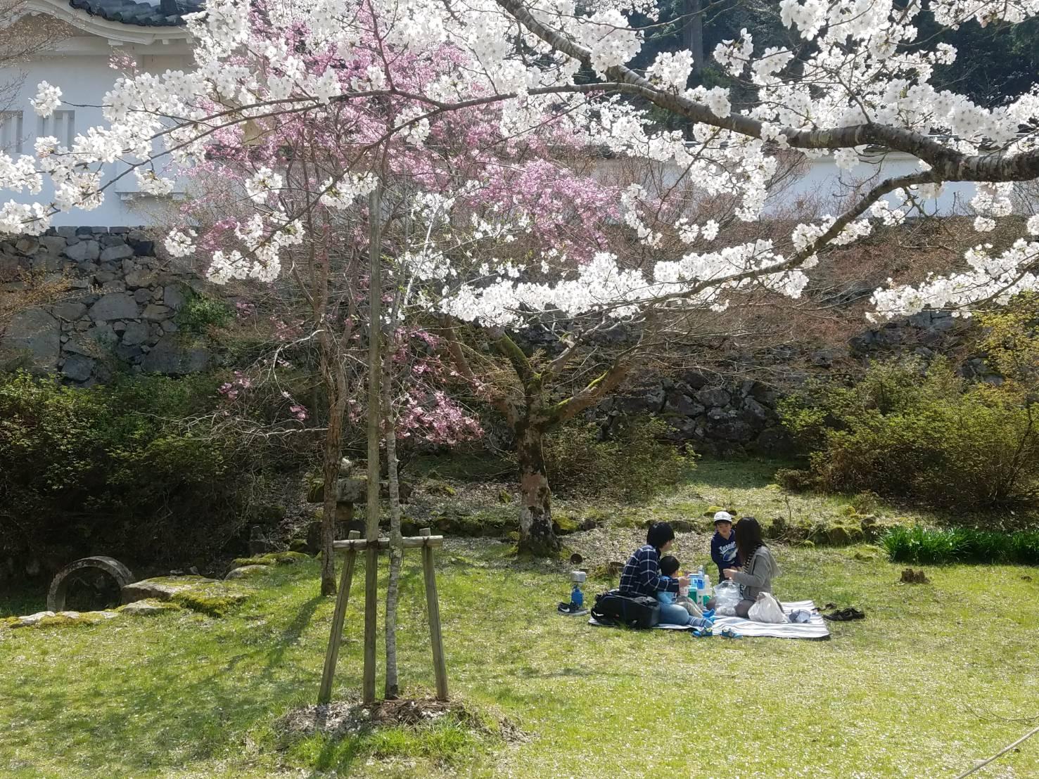 出石城 お花見 桜