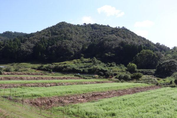 出石 蕎麦畑