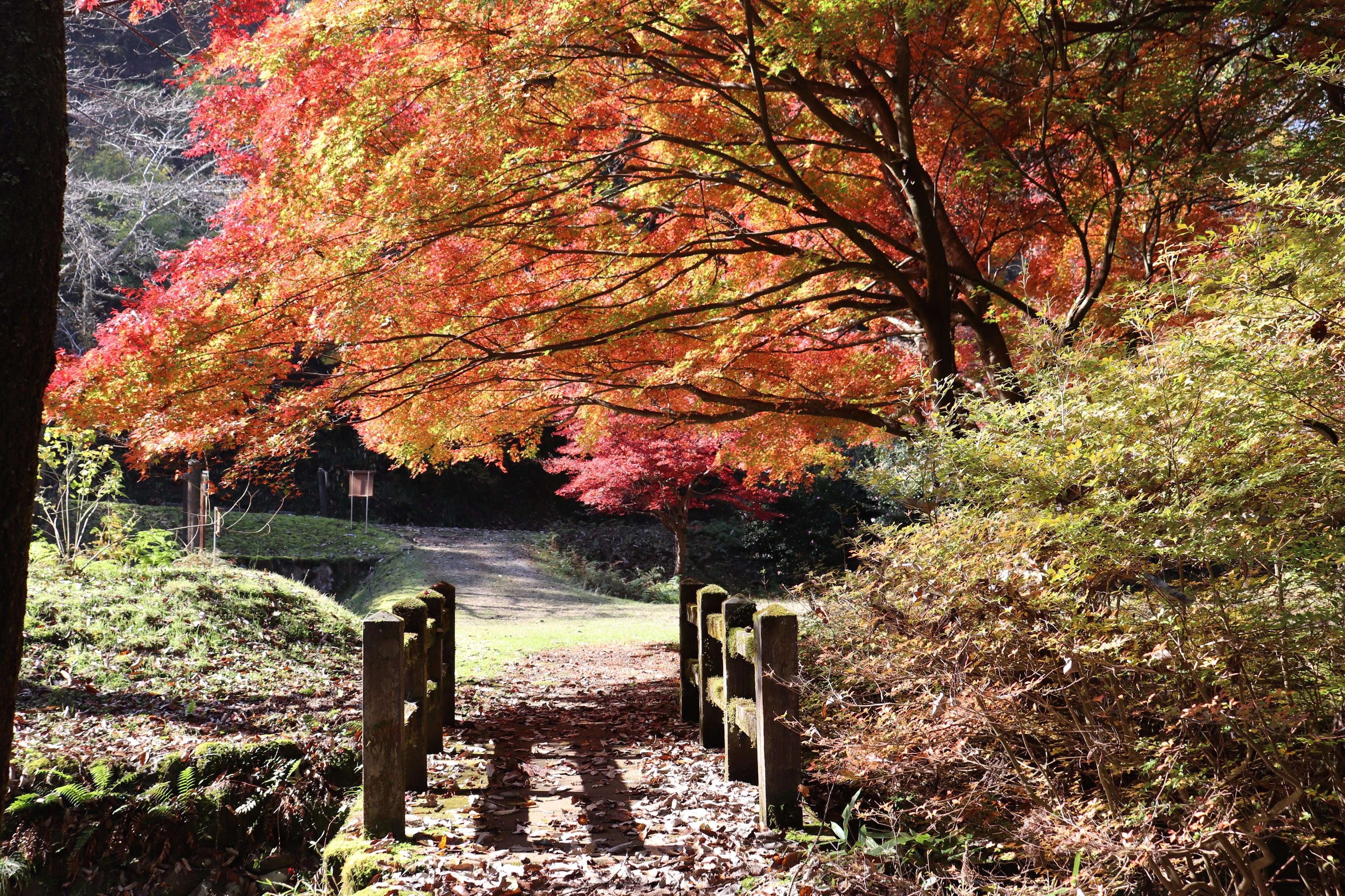 出石 白糸の滝 キャンプ 紅葉